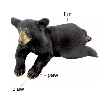 cub.jpg