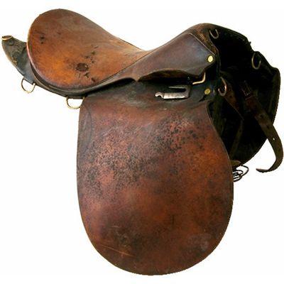 saddle_horse.jpg
