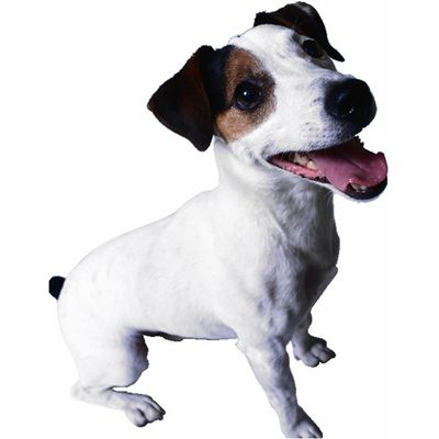 terrier.jpg